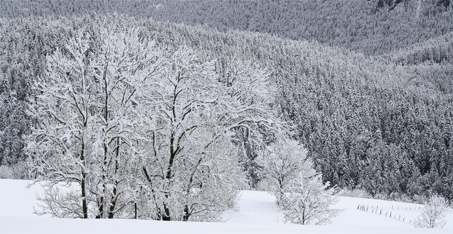 """""""La grande trahison de la neige"""" (Malraux aux Glières) © Patrice Morel (4 avril 2019)"""