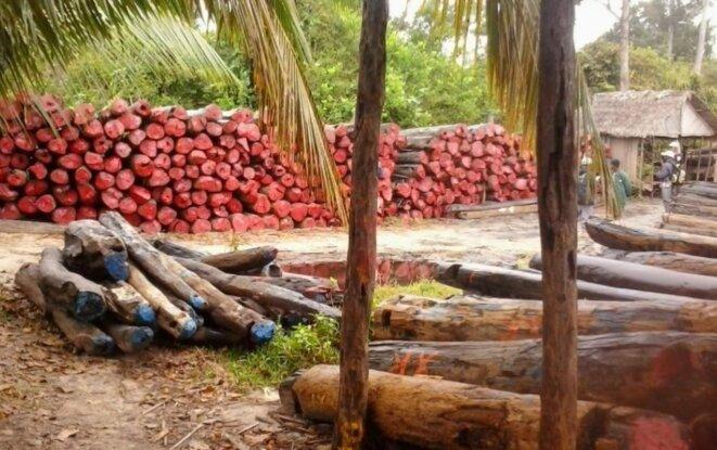 Bois de rose, source de la fortune colossale de Andry Rajoelina et de M.Ravatomanga, estimée à TROIS MILLIARDS CINQ CENTS DE DOLLARS ( 3.500.000.000$ US)