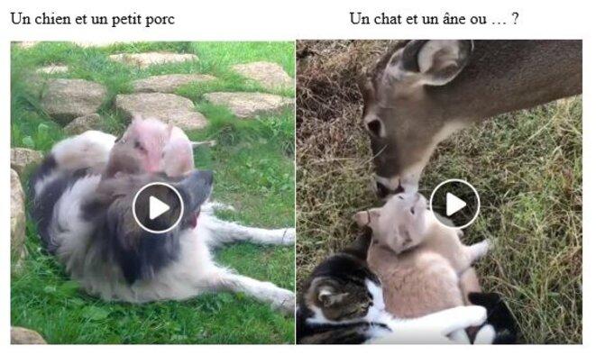 chien-porc-chat-ane
