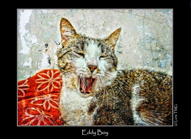 Eddy Boy © Luna TMG
