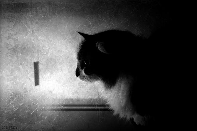 Myrtille © Luna TMG