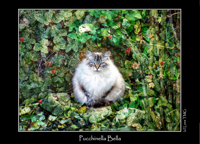 Pucchinella Bella © Luna TMG