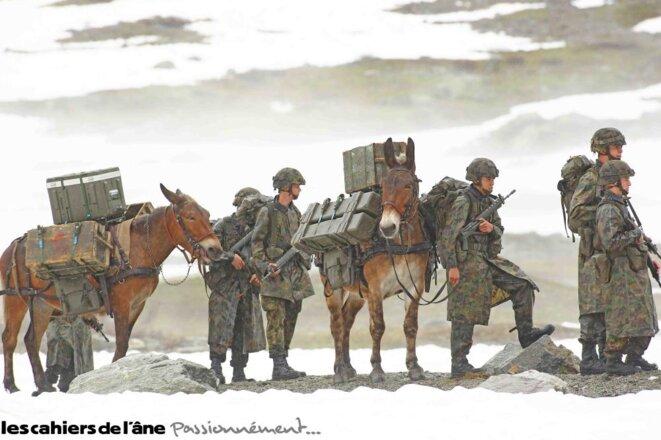 cover-n76-mule-alogo-2
