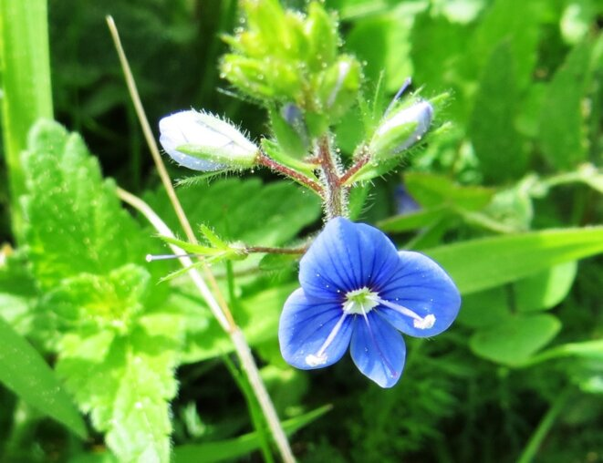 petite-fleur