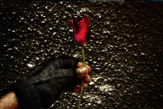 La dernière fleur © Luna TMG