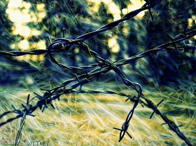 The scar / La cicatrice © Luna TMG