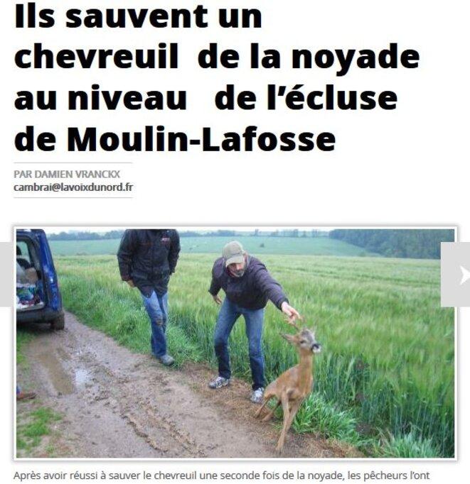 le-chevreuil-qui-ne-pige-pas-comme-me-lambert