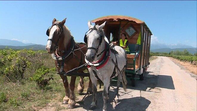 perp-tour-de-france-cheval-roulotte-00-00-03-01-4282004