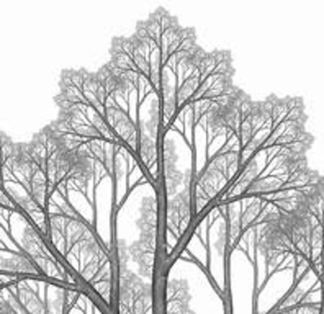 arbre-fractal