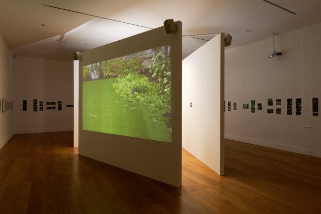 """Babette Mangolte, """"Eloge du vert"""", installation, vidéos, photographies, Spaces to SEE. Musée d'art contemporain de la Haute-Vienne, château de Rochechouart, 2019. © Babette Mangolte, Photo : Aurélien Mole"""