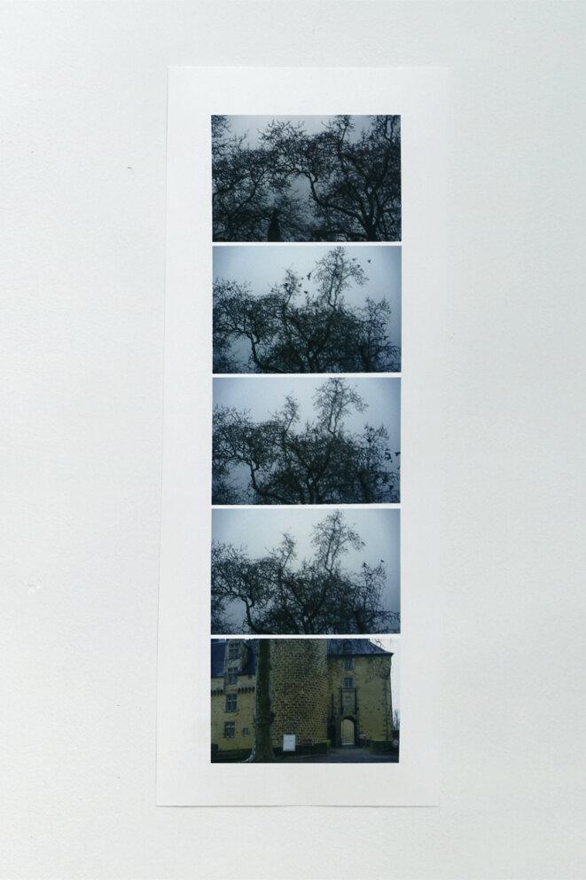 """Babette Mangolte, """"Eloge du vert"""" (détail, Rochechouart), photographies, Spaces to SEE. Musée d'art contemporain de la Haute-Vienne, château de Rochechouart, 2019. © Babette Mangolte, Photo : Aurélien Mole"""