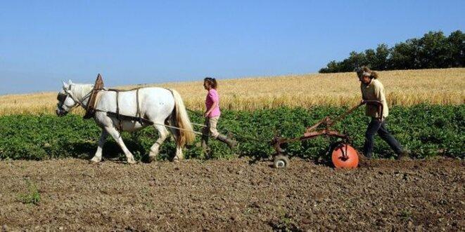 l-agriculture-bio-progresse-en-france-et-cree-des-emplois