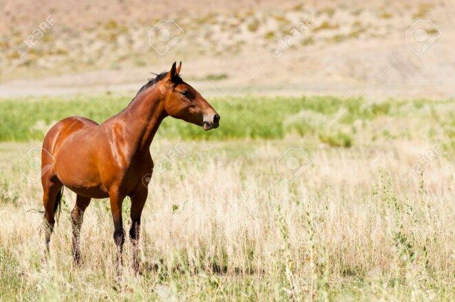 68173827-sauvage-mustang-cheval-dans-le-de-sert-du-nevada