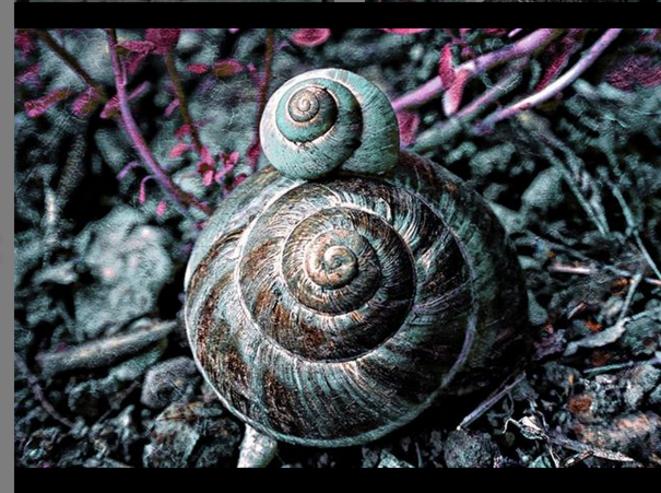 Escargots © Luna TMG