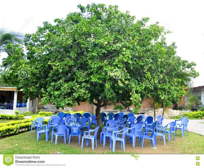 arbre à palabre © dreamsteam.com