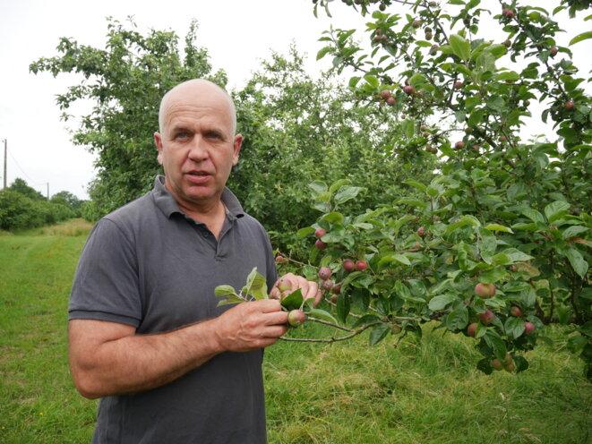 Christophe Bitauld est un producteur bio de pommes à cidre installé en Ille-et-Vilaine. © SD