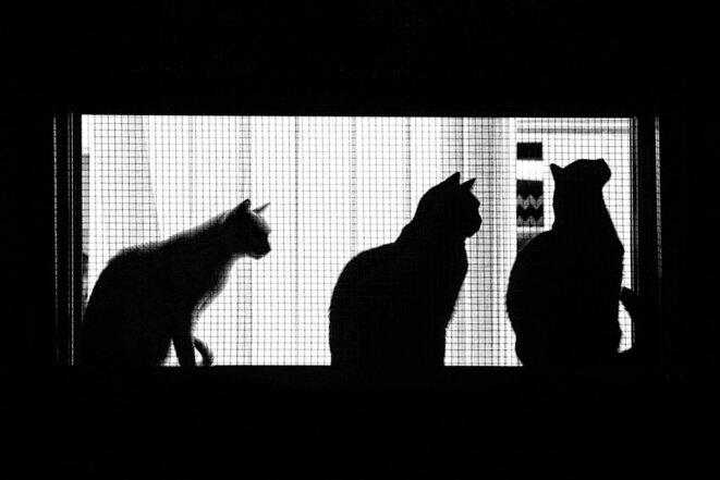 Trois chats © Luna TMG