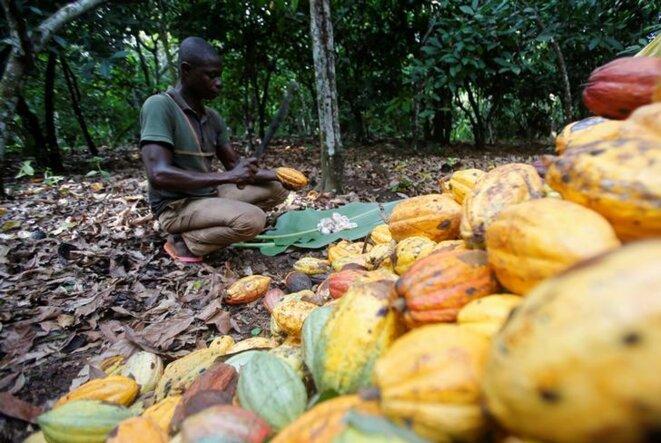 Un ouvrier du cacao à Toumodi (Côte d'Ivoire) en octobre 2018. © Reuters