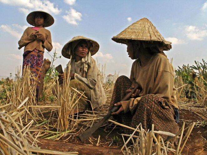 Des riziculteurs au Laos, dans la province du Salavan. Un projet de loi pourrait bientôt permettre aux investisseurs étrangers d'acheter des terres au Laos. Des groupes de citoyens signalent que la loi discriminera les paysans, y compris les minorités ethniques et menacera la souveraineté nationale. © Phil Douglis/Vientiane Times