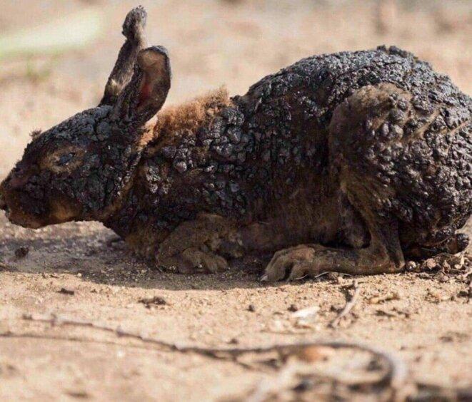 Le monde animal sibérien brûlé vif.