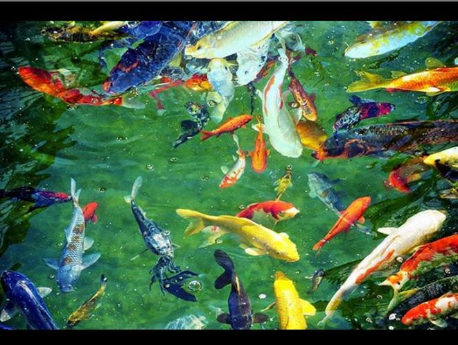 Fishbowl Symphony © Luna TMG