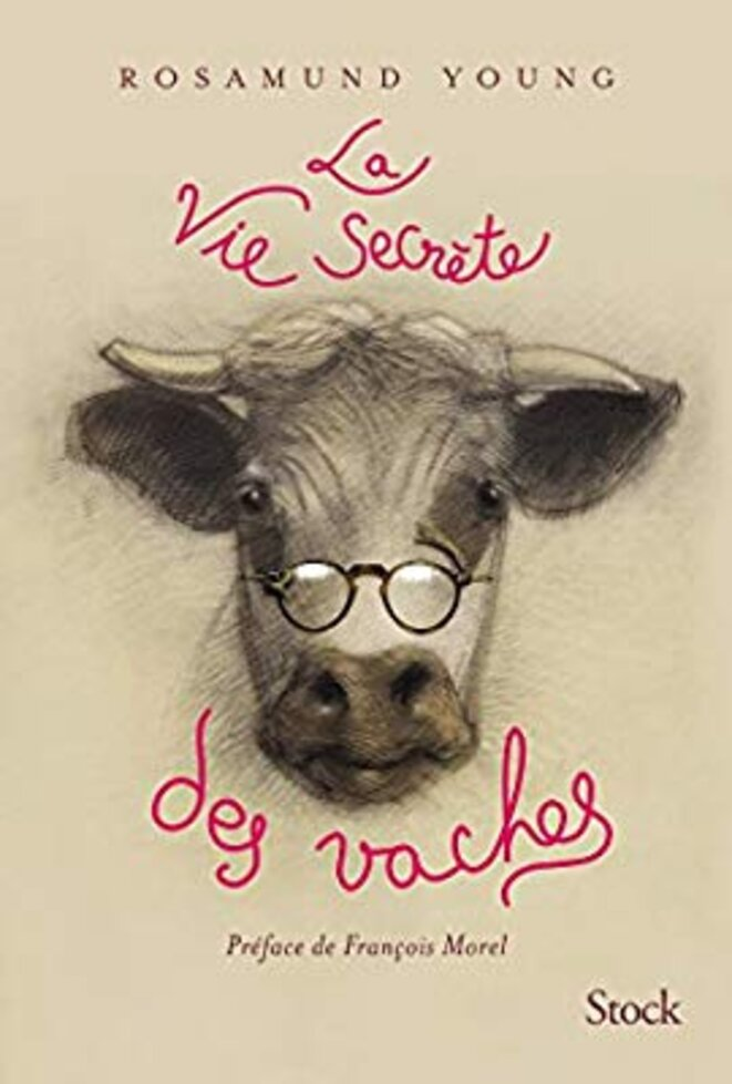la_vie_secrète_des_vaches © Daniel Jan