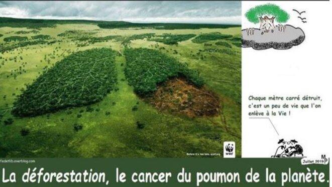 la-deforestation-et-le-cancer-des-homo-sapiens