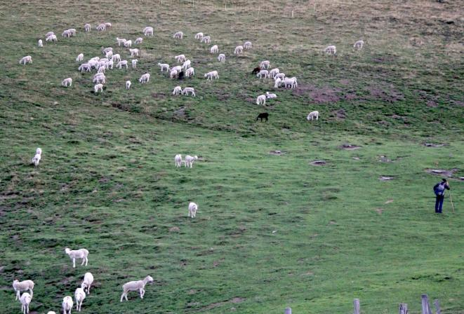 Un berger et une partie de son troupeau sur une estive à côté de la cabane des Cos dans le Couserans. © ER