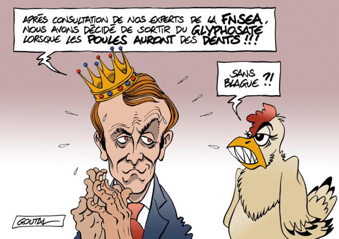1-dent-macron-poule-bonne-ds