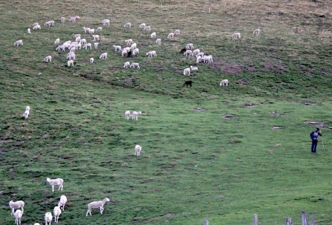 Un pastor y una parte de su rebaño en una pradera junto a la cabaña del Cos en Couserans. © ER