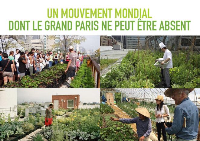 Partout dans le monde, l'agriculture urbaine s'impose comme une évidence © Baptiste François