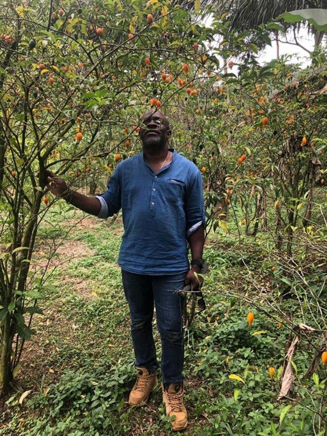 """Hervé OMVA OVONO, Coordinateur de l'ONG """"IDRIC-AFRICA"""" et initiateur du 1er Forum International sur la Tabernanthe qui se tiendra à Libreville au Gabon, juillet 2020  - Plante : Tabernanthe"""