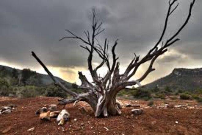 arbre-mort