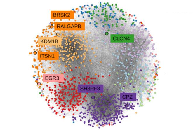 Un travail d'équipe : une nouvelle récolte de gènes de l'autisme intègre ceux qui régulent la communication des neurones. © Spectrum News