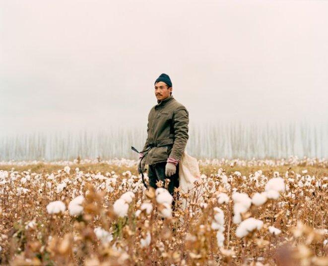 Pour maintenir une certaine stabilité dans la région, le régime y stimule l'emploi en implantant des industries comme celle du coton (ici un saisonnier ouïgour, vers Luntai). Le Xinjiang a fourni 78 % des 6 millions de tonnes produites par la Chine en 2018. - Patrick Wack / LAIF / REA