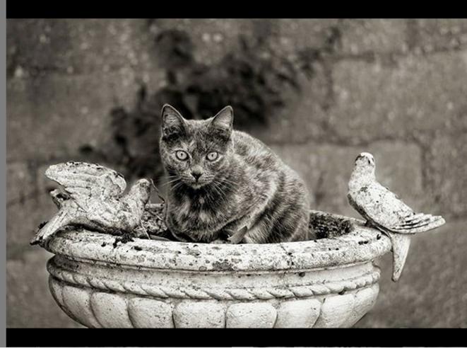 Prune and friends © Luna TMG