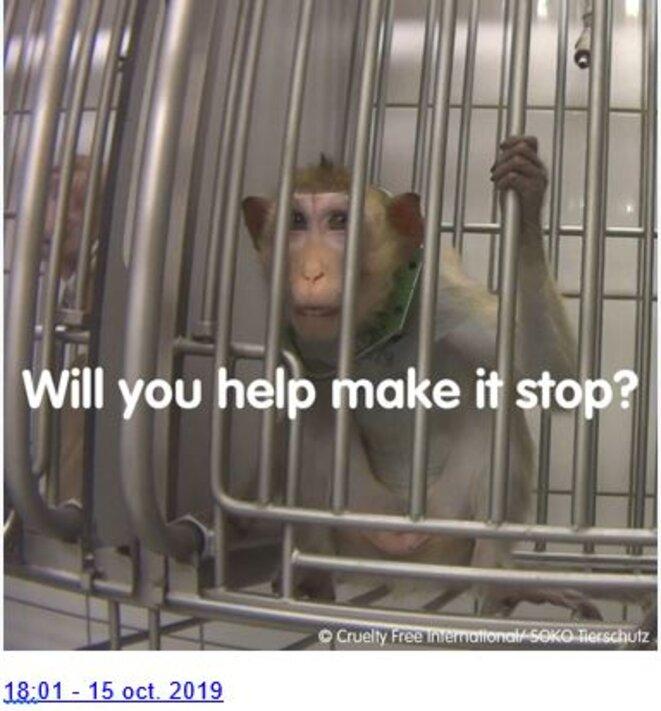 un-singe-dans-un-labo-allemand