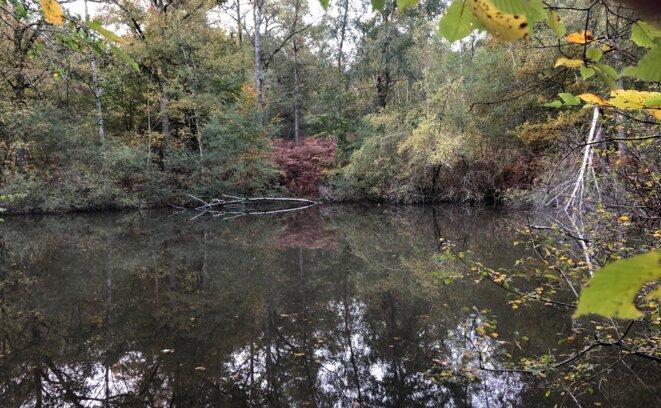 Là où l'étang se rétrécit... © Pierre Peyrard