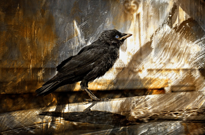 The Crow © Luna TMG