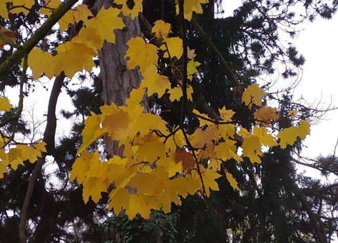 même sur les arbres il ya de l'or en ce moment © GTK