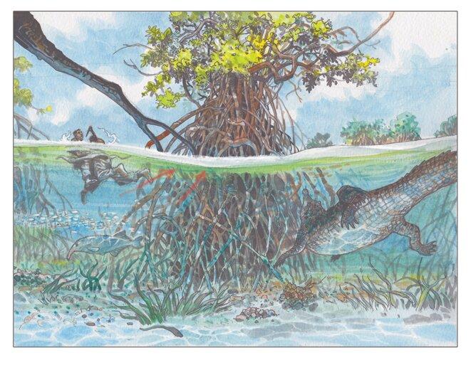 gavial-case1-bbb