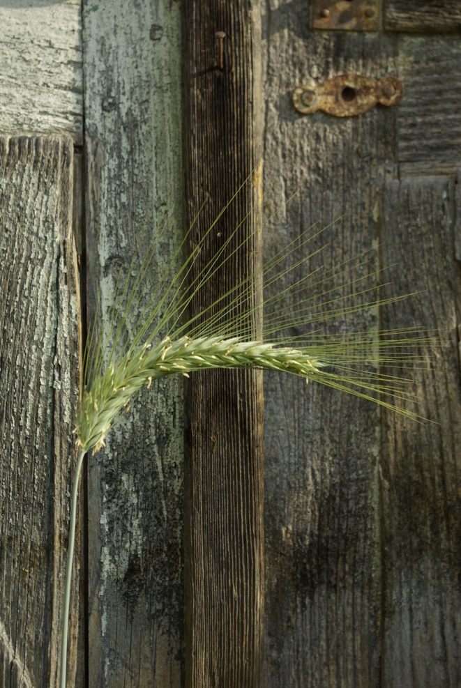 Une autre agriculture © Yves Guillerault