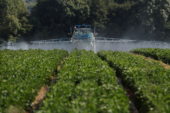 Epandage d'insecticide sur un champ de céleris à Pont-Saint-Martin (Loire-Atlantique). © Archives Reuters