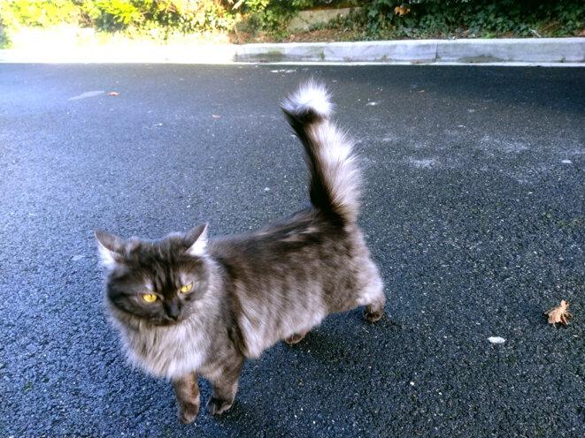 le chat qui marche seul © teaum