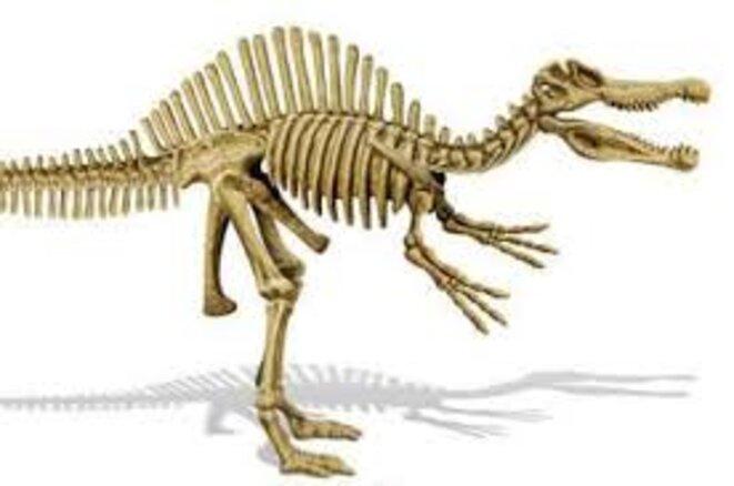 dinausaure-squelette