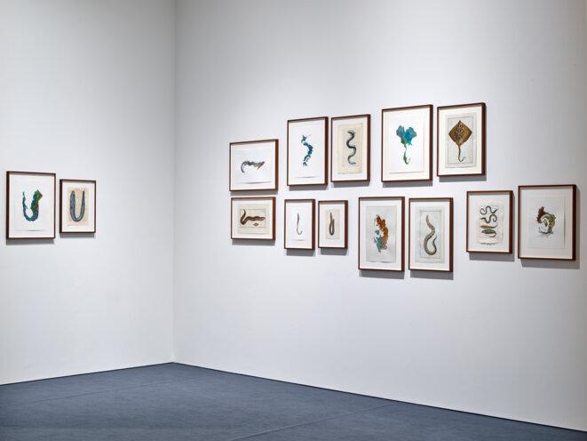 Vue de l'exposition Anri Sala. Le Temps coudé, 11.10.2019 - 05.01.2020, Mudam Luxembourg, « Untitled (Maps / species) » © Photo : Rémi Villaggi | Mudam Luxembourg