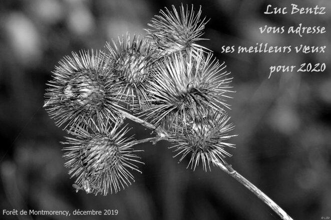 © Luc Bentz