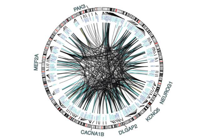 L'occasion d'une mise en réseau : de nouvelles cartes exposent la signature de l'expression génétique de types de cellules spécifiques. © Spectrum News