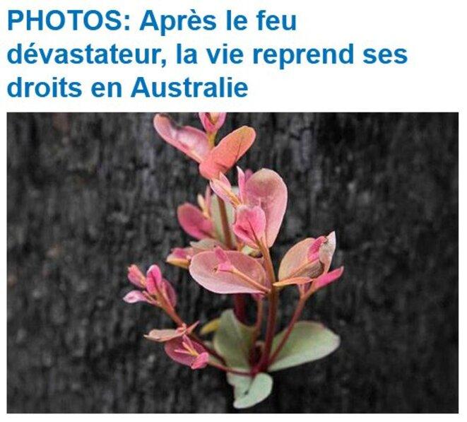 australie-apres-le-feu-la-vie-reprend-ses-droits