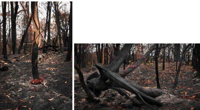 australie-feu-flore-2